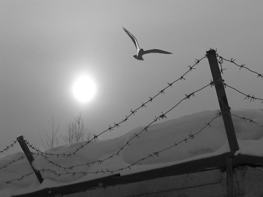 на волю птичку выпускаю